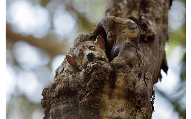 Мадагаскар – остров лемуров. Часть 3: