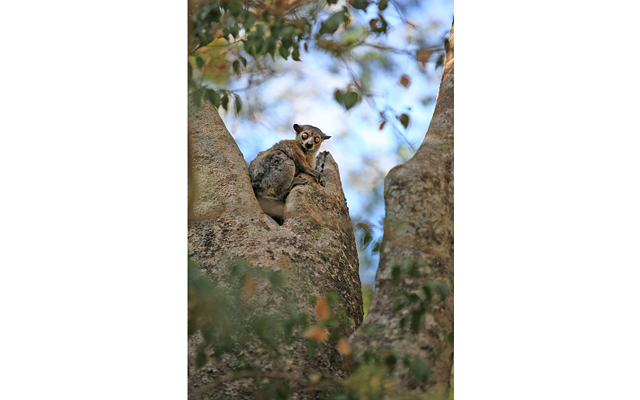 Мадагаскар – остров лемуров. Часть 3: Пробираемся к скалам