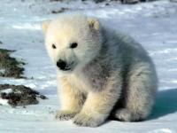 Мои медвежата: Настя и Егор (