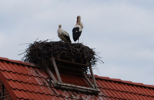Аист на крыше дома своими руками