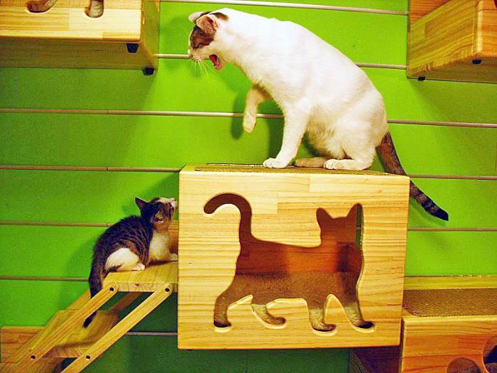Кошки из ноКоробка своими руками декупаж