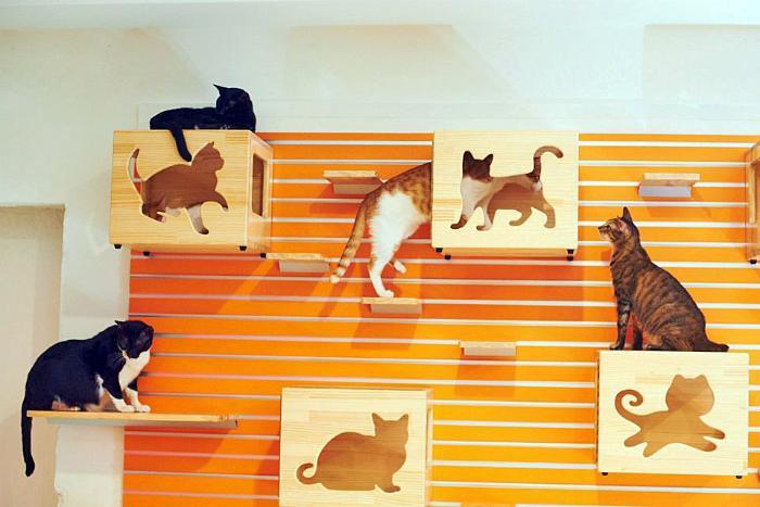 Комплекс для кошек из картона