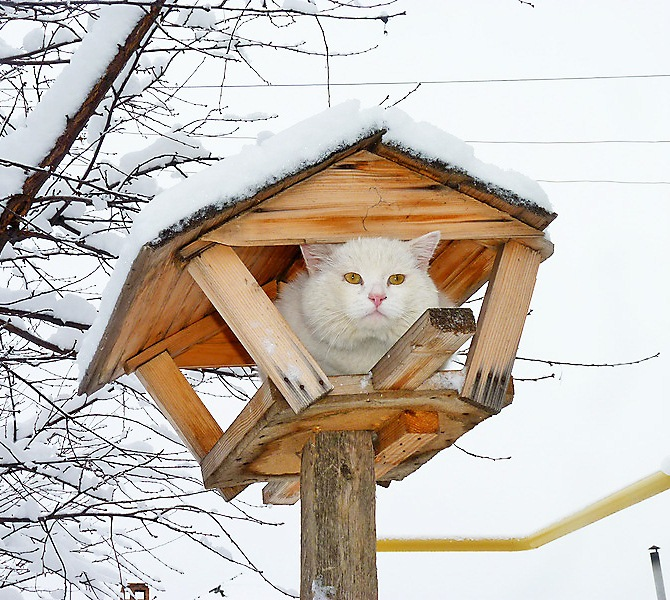 Звери - Коты в кормушках