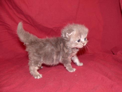 как выгляди котенок в 4 недели фото