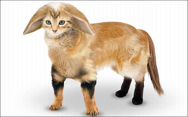 Гибрид кота и собаки