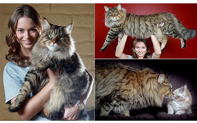Самый толстый кот в мире: