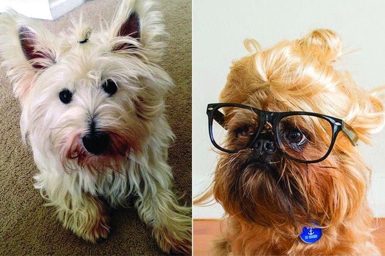 Собаки с гульками - новый модный тренд