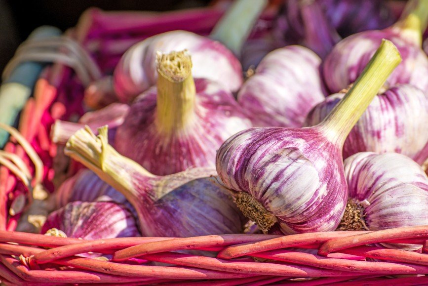 В Италии вырастили чеснок без запаха