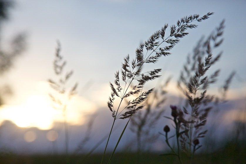 Полевые цветы: Кучевые облака громоздились в небе. Они были на взгляд такие тугие, что можно было, очевидно, лежать на их ослепительных белых