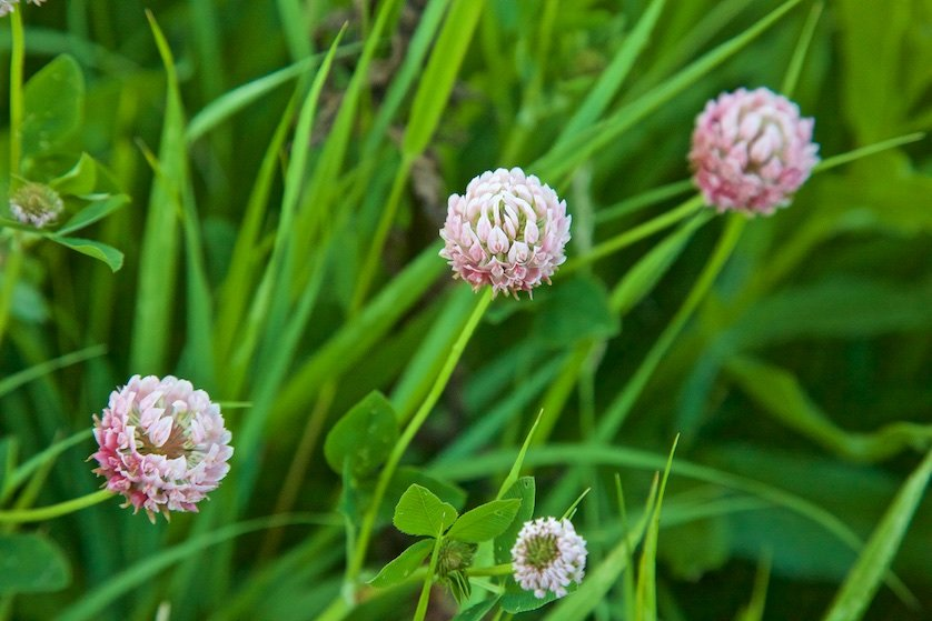 Полевые цветы: На поляне около лесной опушки я увидел синие цветы. Они жались друг к другу. Заросли их были похожи на маленькие