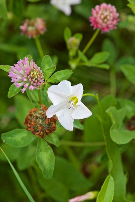 Полевые цветы: Что может быть лучше этой неожиданной девичьей улыбки на глухой полевой дороге, когда в синей глубине глаз вдруг появляется влажный