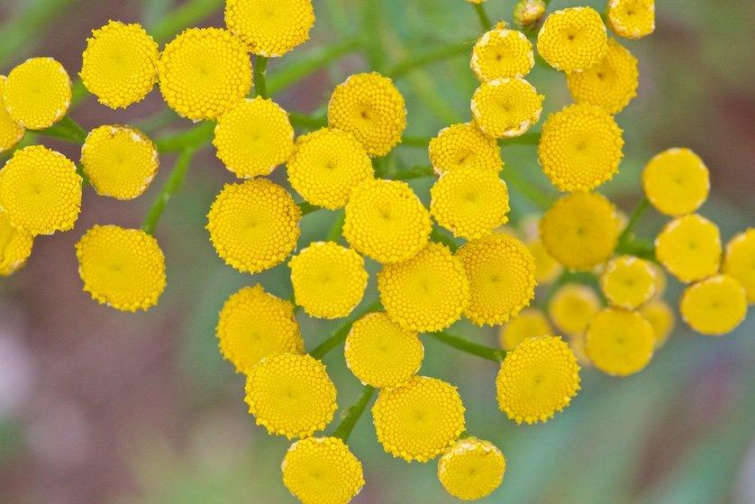 Полевые цветы: – Ишь притворенный, – ответила старушка и хитро покачала головой. – Уж будто ты и не знаешь! Сказать этого я