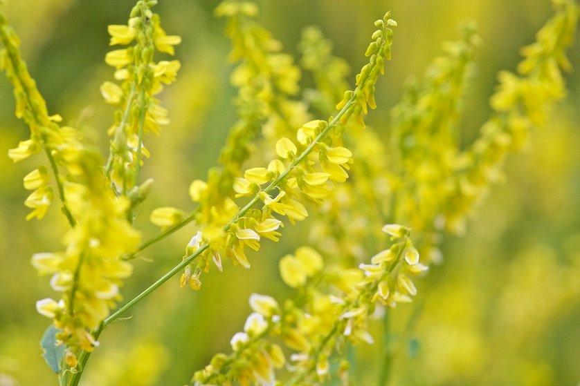 Полевые цветы: Их возрастили в теплицах заботливо,  Их привезли из-за синих морей;