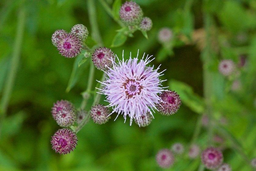 Полевые цветы: Их не пугают метели холодные,  Бурные грозы и свежесть ночей…