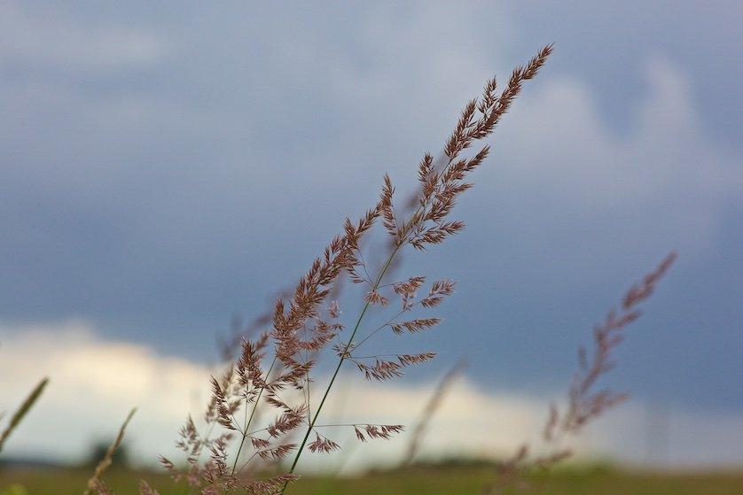 Полевые цветы: И говорят про давно позабытые  Светлые дни.