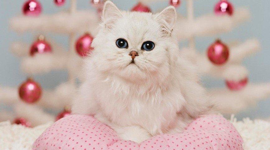 На Новогодней ёлке раздадут собак и кошек