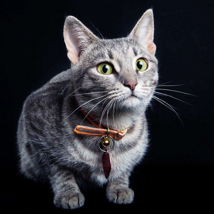«Тыквы и коты» – фестиваль с пользой для людей и котиков