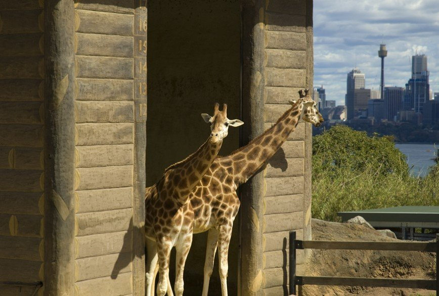 Завтрак с орангутангом: чем еще могут удивить лучшие зоопарки мира?