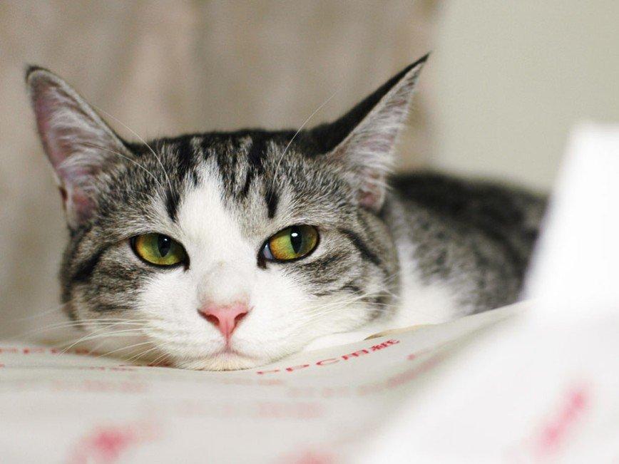 Бездомные животные хотят «Домой»