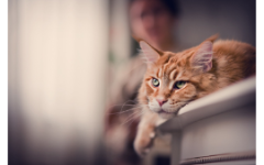 Елена Михалкова не рекомендует обижать котов