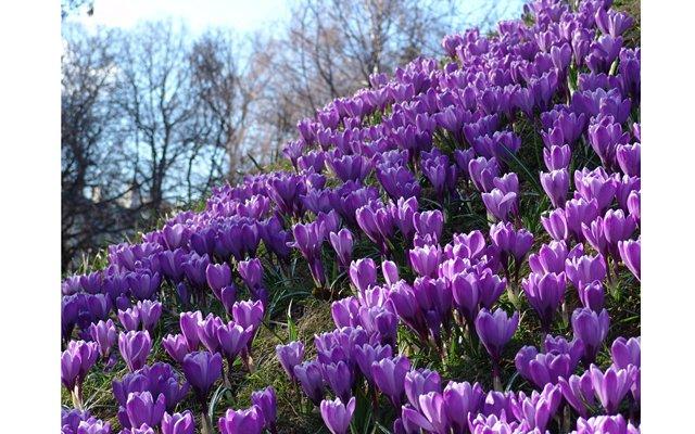 XIV Весенний фестиваль цветов в Ботаническом саду МГУ