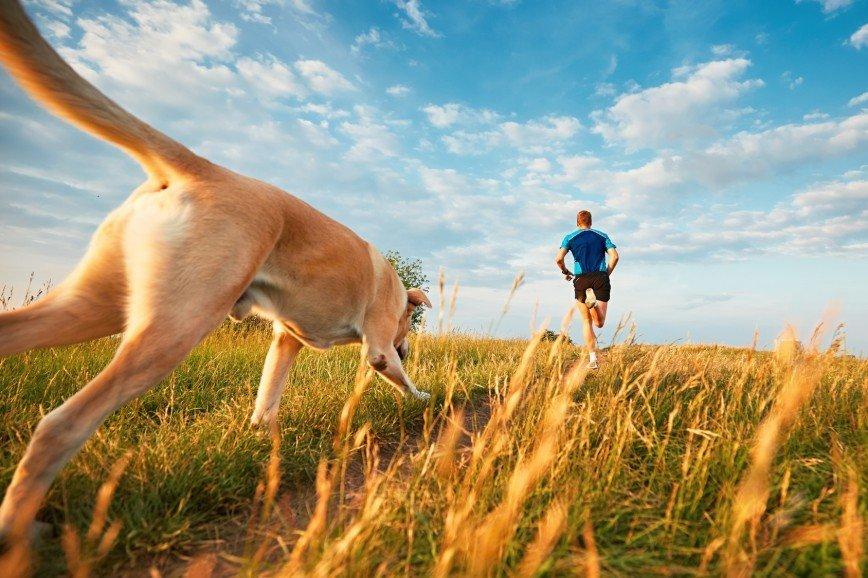 Пушистый забег: москвичи побегут вместе с собаками