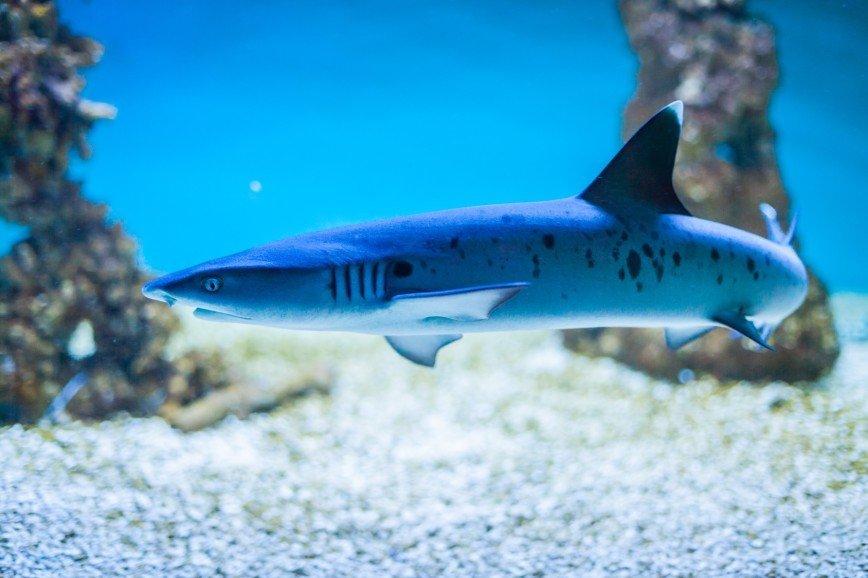 В Московском зоопарке можно будет посмотреть на акул