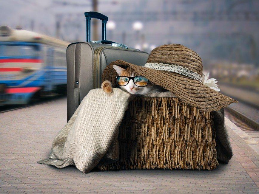 Путешествуете с кошкой? Пожалуйте в бизнес-класс!
