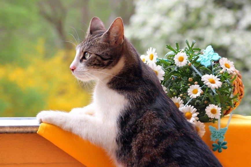 Падение кошки с высоты. Какую помощь оказать?