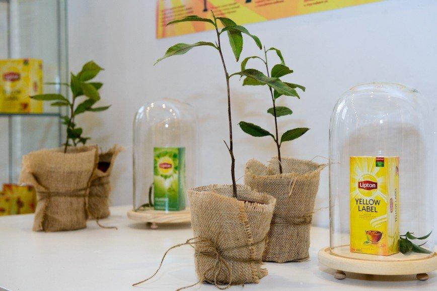 Ти-тестер: развенчиваем мифы о редкой профессии: Самый первый чайный аукцион состоялся в Лондоне в 1679 году. И хотя современные торги проводятся ближе к плантациям производителей, их