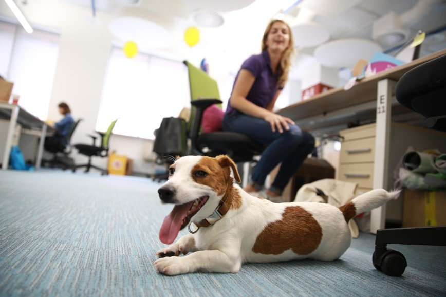 Домашние животные на рабочем месте вдохновляют хозяев