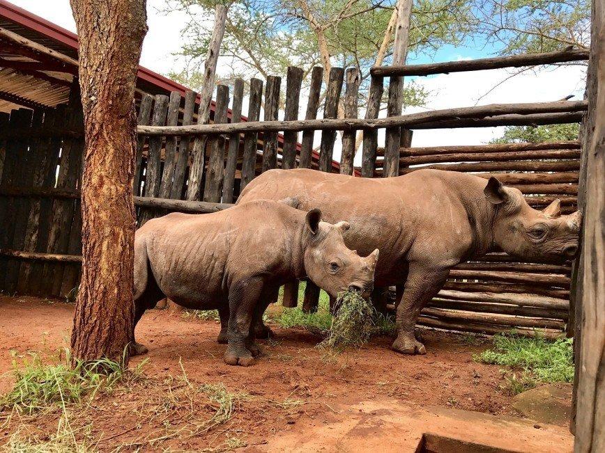 Черные носороги стали пассажирами рейса из Йоханнесбурга