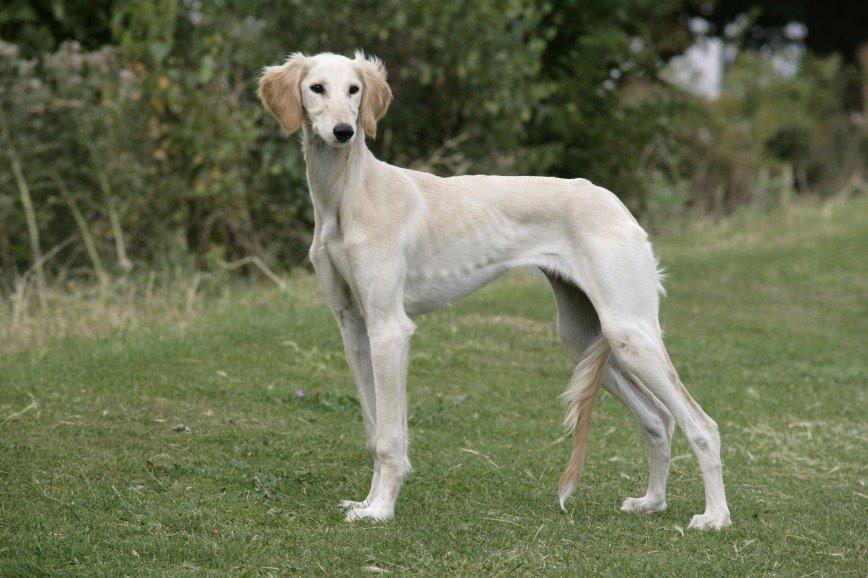 Быстрее, выше, сильнее: собаки – рекордсмены