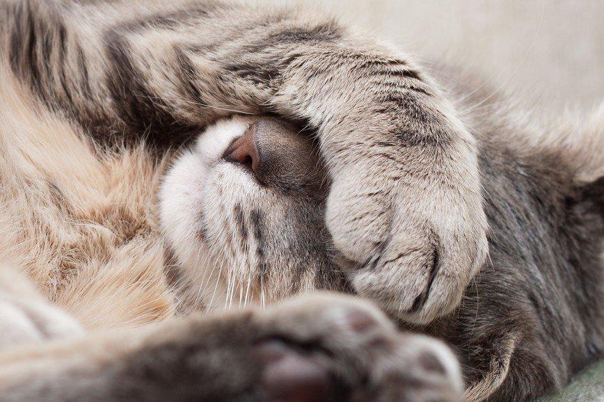 Австралия может ввести круглосуточный комендантский час для кошек