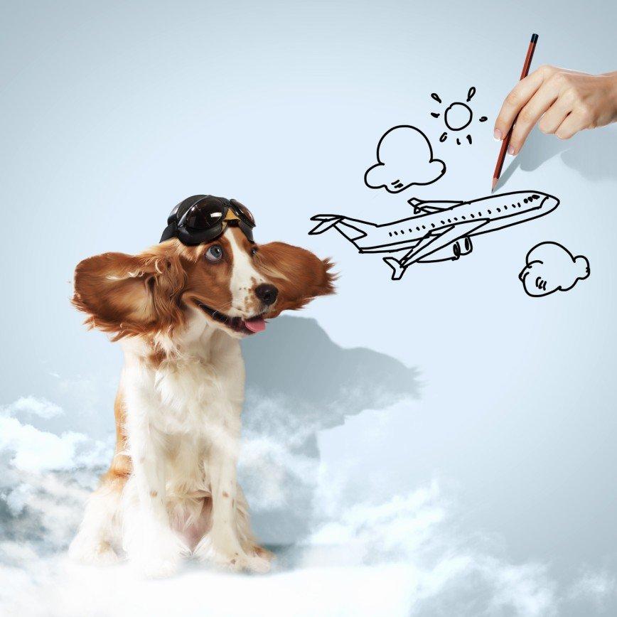 Домашние животные будут летать первым классом