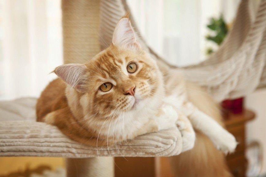 Какие породы кошек позволительно стричь. И нужно ли это делать?