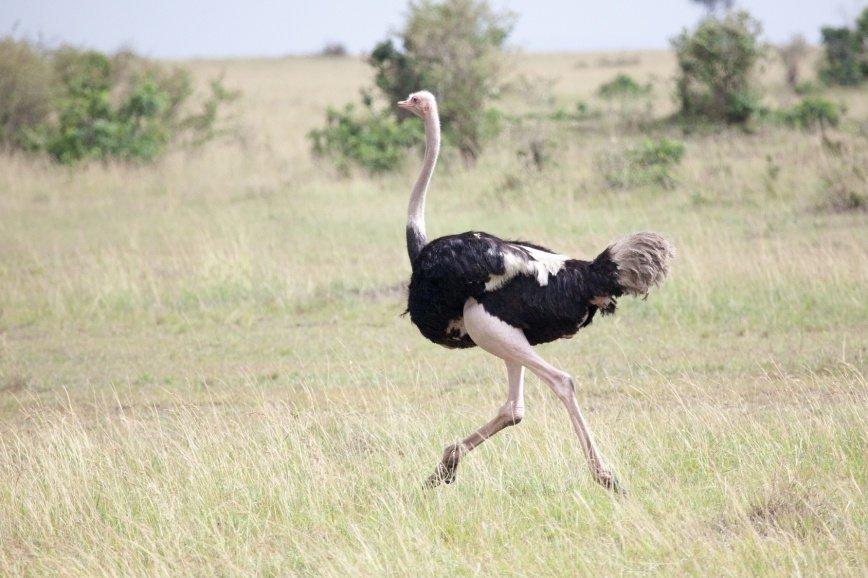 У страуса в Московском Зоопарке появился опекун