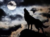 Мое фото Одинокий волк