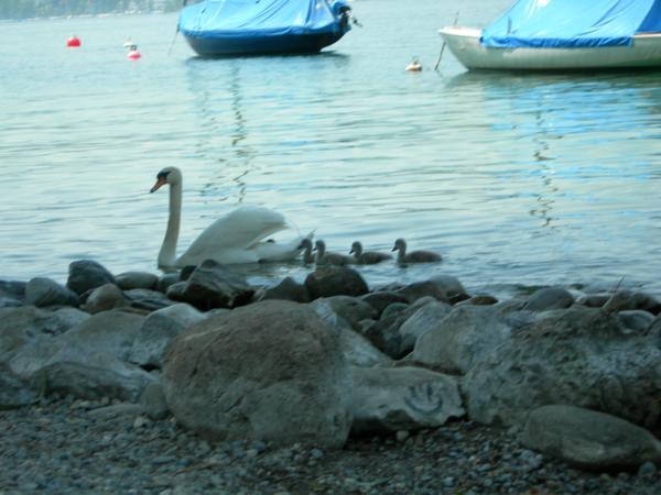 на следующий день: обучение плаванию :-)
