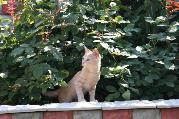 Наш котенок Степка.