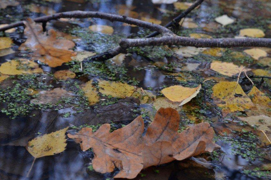 Автор: Ануля, Фотозал: Родные просторы,  Осенняя лодочка