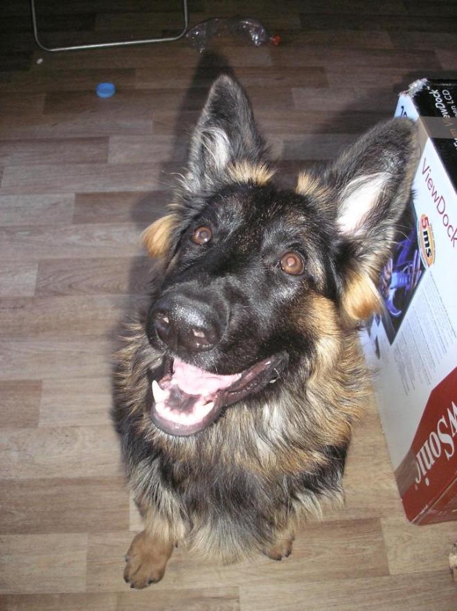 Собака-улыбака. 6 мес ровно.