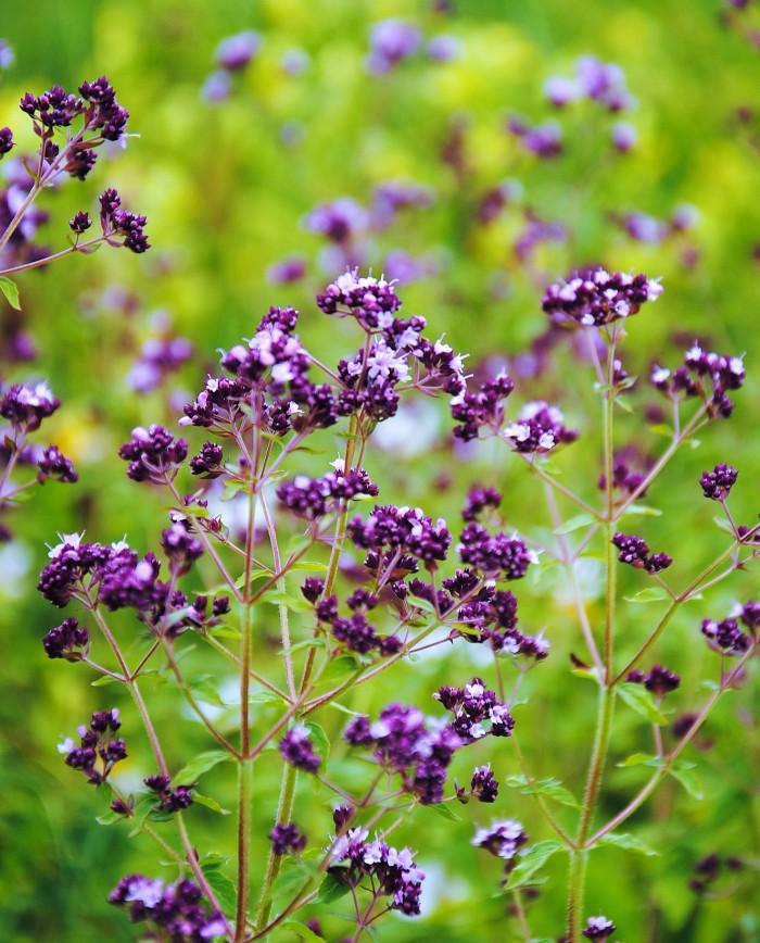 аптека цветок