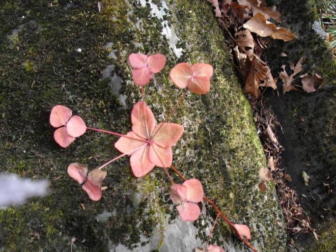 Вот  такой  цветочек  нашла  в  лесу