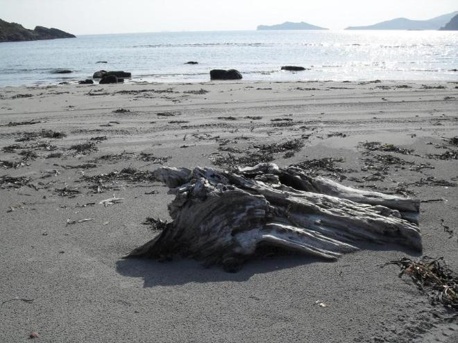 На  берегу  попадаются  всякие  интересные  предметы. Крабики, ракушки, выбеленные  морем  куски  дерева....