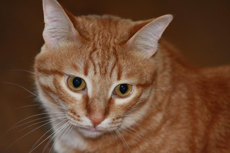 Друг ИХ Сенька ,найден в степи .. Хутороской кот ..дурак полный,трусс,НО красааааавеЦ!))