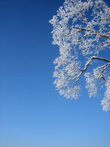 Просто прикольные виды зимних деревьев (сама фотографировала).2006год