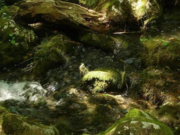 Болгария, лесной ручей (лето, 2006г.)