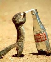 Мое фото Business_Squirrel