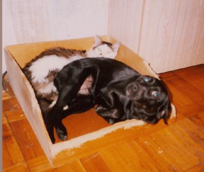 Собака Зося и кот Остап